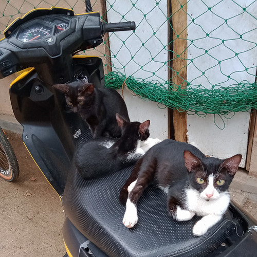 Pussies on the Bike
