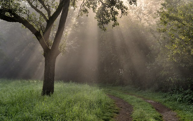 *morgens in der Wiese am Waldrand*