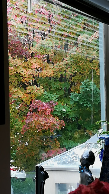 Autumn out my window