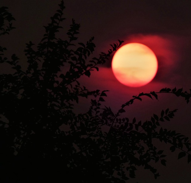 Last Red Sun Of The Summer