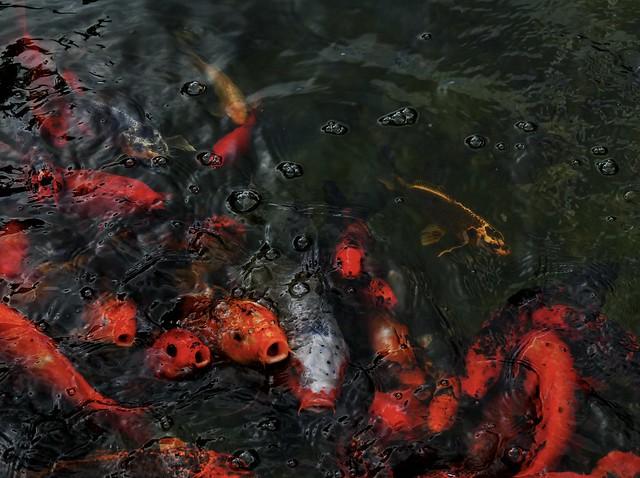 Orange Swirlies (reflection below)