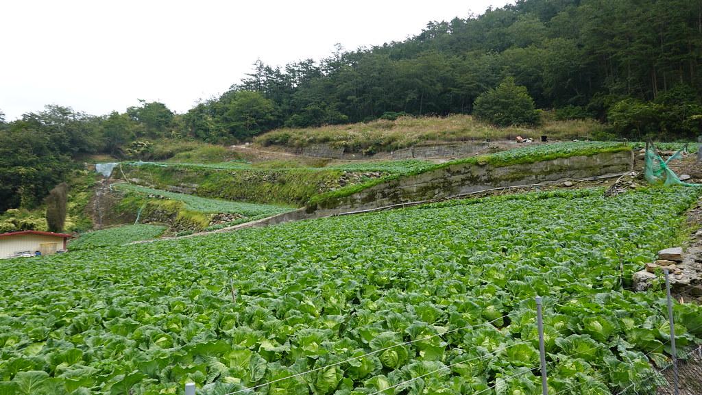 武陵農場周邊仍有許多土地作為高山菜園使用。孫文臨攝