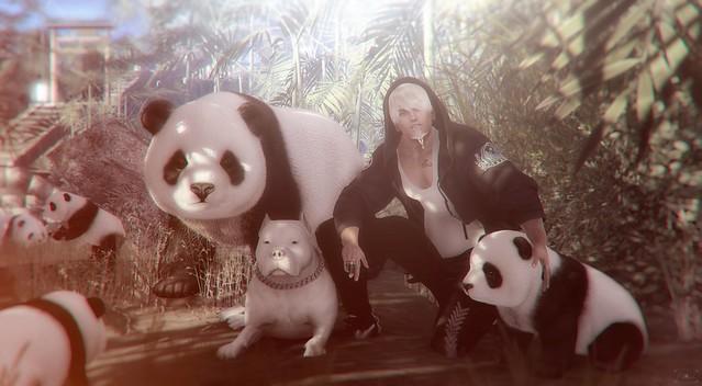 Hidden panda ;)