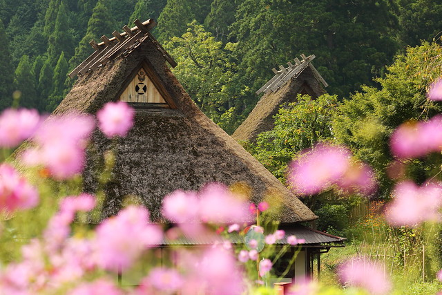 The thatched houses