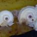 Wet Sargassum-624.jpg