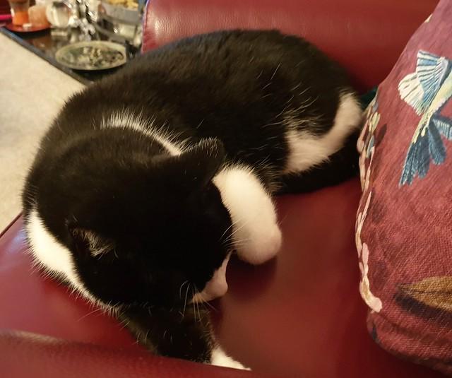 Snoozing cat 1