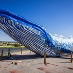 Ethyl The Whale-2.jpg