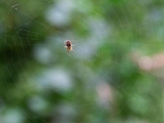 Web under repair
