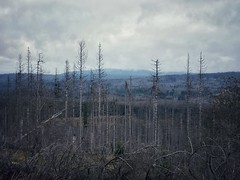 Our forest in climate change