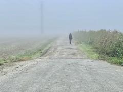 Desde la niebla