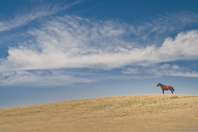 Horse on Prairie Hill 0459 C