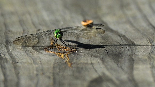 Emeralds and Rust