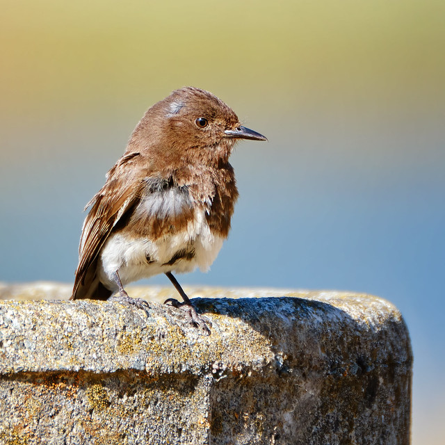 Perched on a well