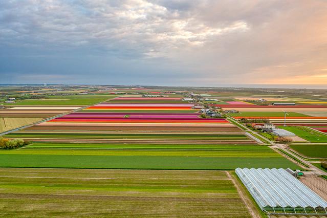 Farmlands near 't Zand, Holland.