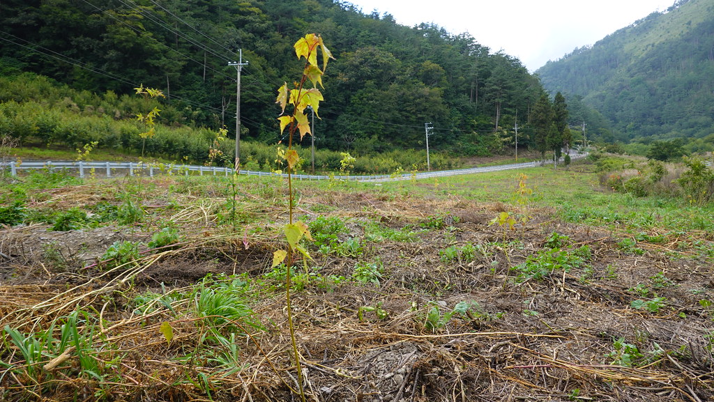 慈心基金會在有勝溪溪畔的廢耕土地造林。孫文臨攝