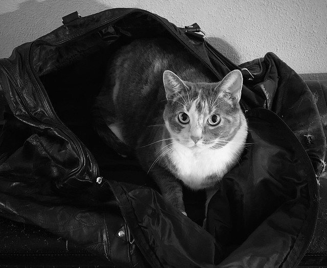 The cat is in the bag again!