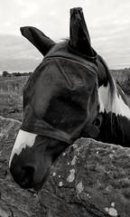 Black hat day ... #Horse #Pony