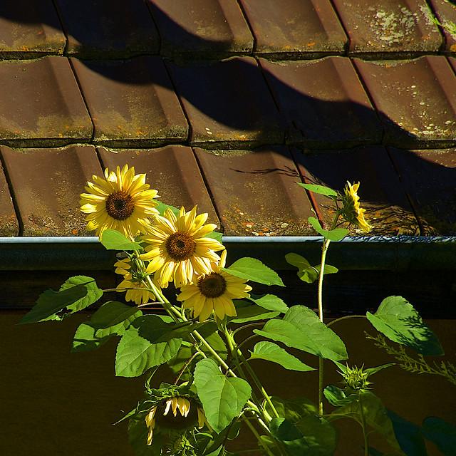Early Autumn Light & Shadow
