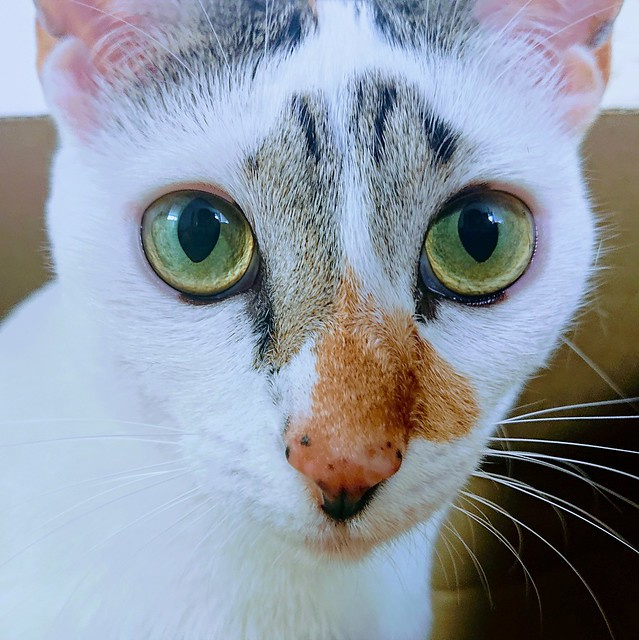 367b: cat communion