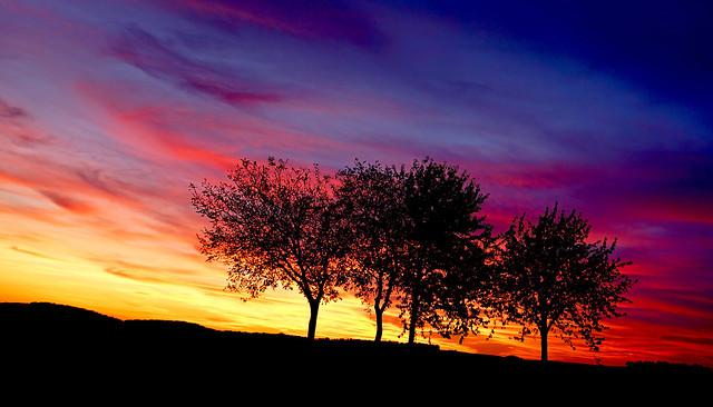 Sunset in Winequarter
