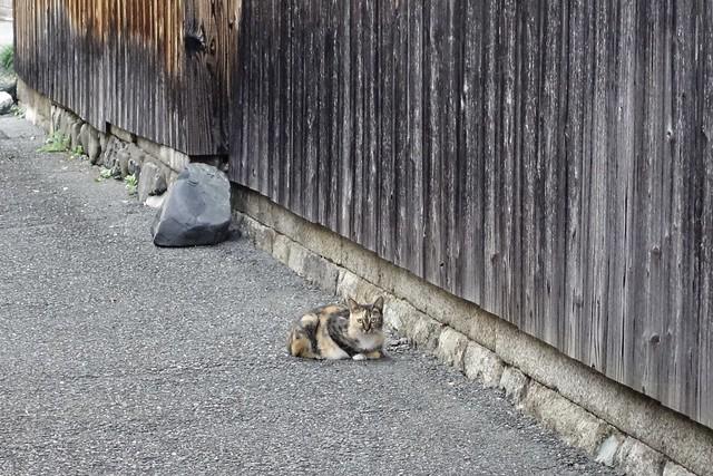 Today's Cat@2021−09−24