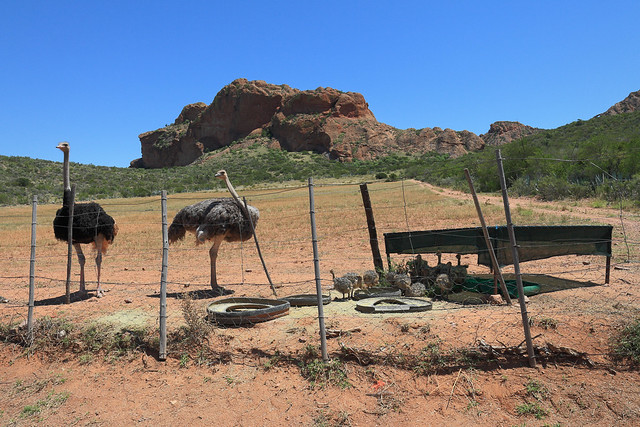 South Africa - Little Karoo