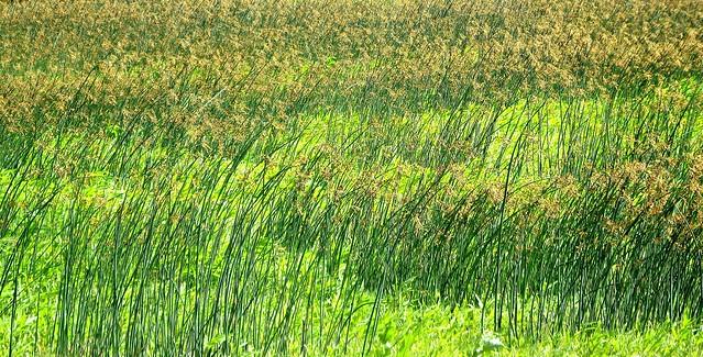 Missouri Landscapes - Grassland