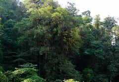 Nature in Mashpis rainforest