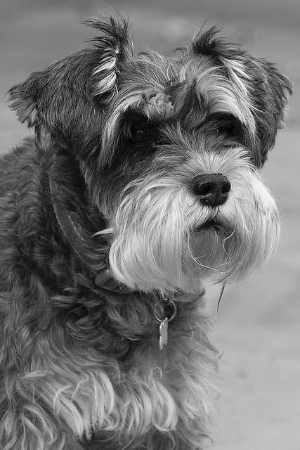 Tilly Monochrome