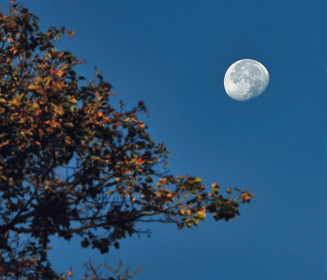 Moon In The Morning