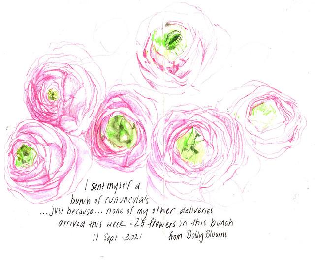 11Sept2021 Ranunculus
