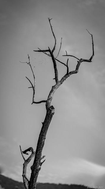 Un arbre mort…a dead tree..