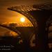 Sunrise @ Garden By The Bay 25Sep2021