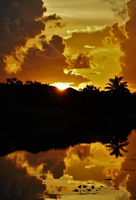 Gold Dawn