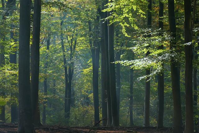 Der träumende Wald - The dreaming forest