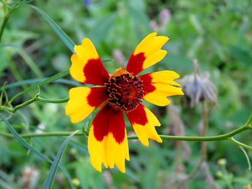 wildflower decay