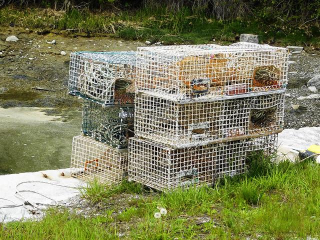 Lobster Traps #1