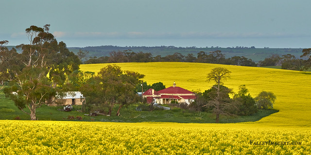 Red Green and Canola