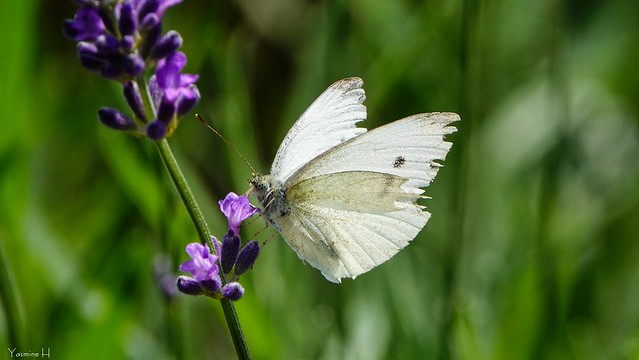 10187 - Butterfly
