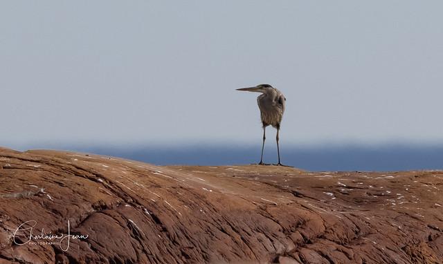 Le gardien de la Baie