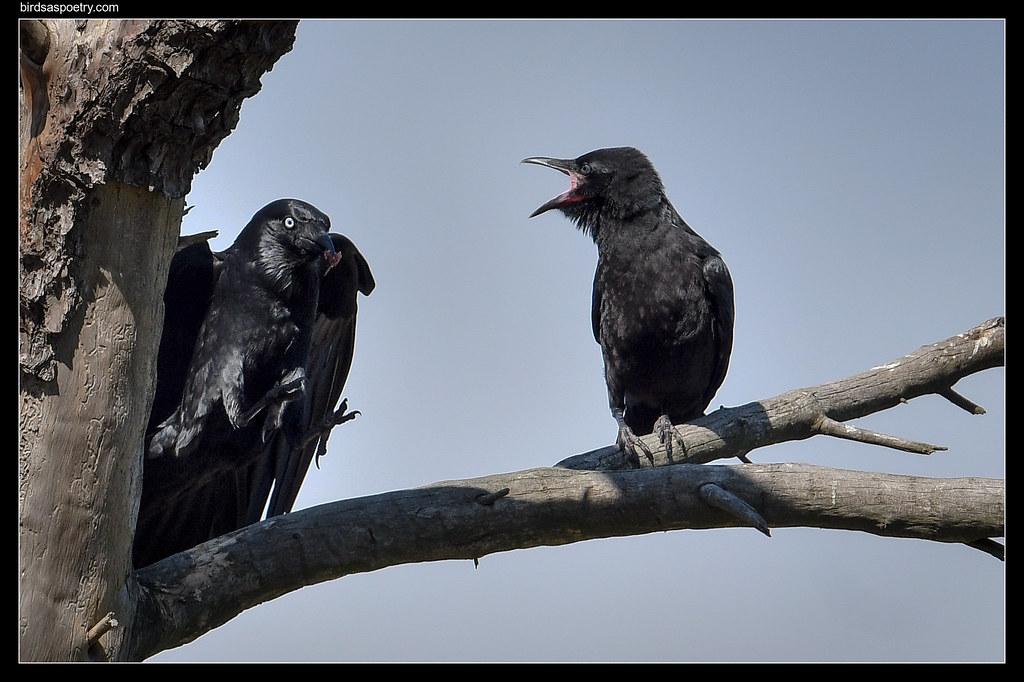 Litttle Raven: Way to Go Mum!  Breakfast!