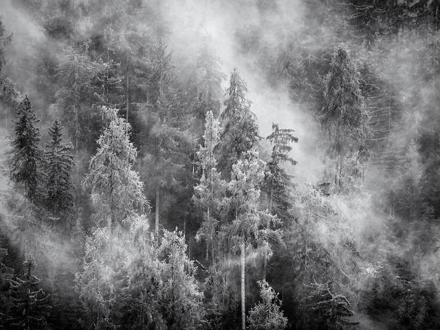 Mountain Rainforest...