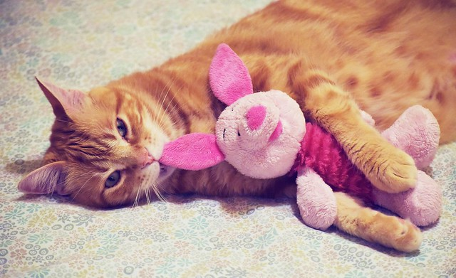Spritz and his stuffed Piglet 🐷