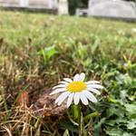 Wildflowers of Greenwood