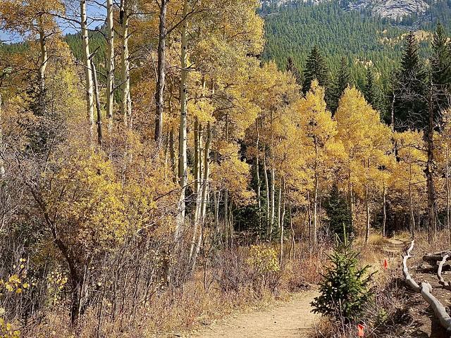 Fall colors at Colorado Golden Gate Canyon