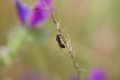 Formiga (Ant) - On Explore