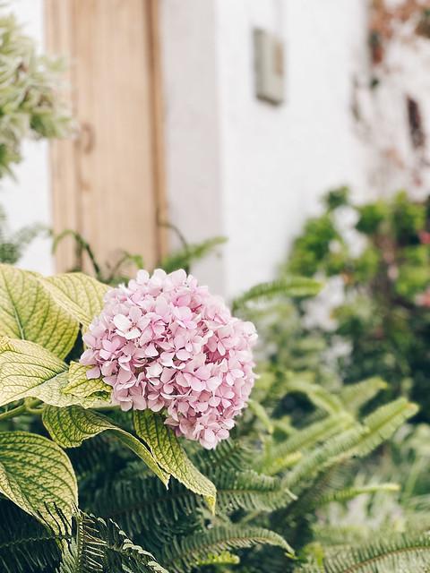 Dos gardenias para ti…