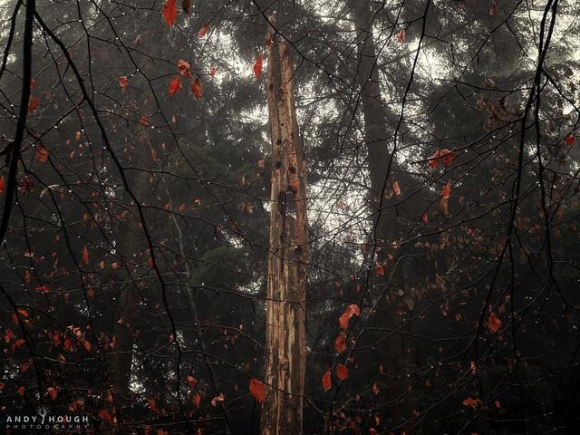 The arboreal scream