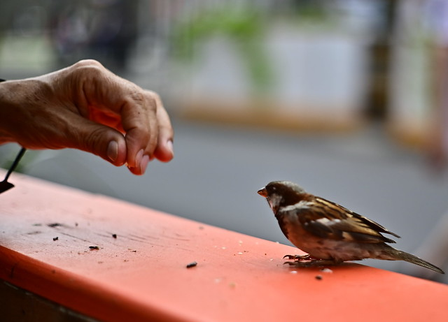 Hand and the Sparrow