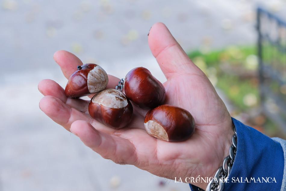 castañas vaguada de la palma (1 de 1)-5